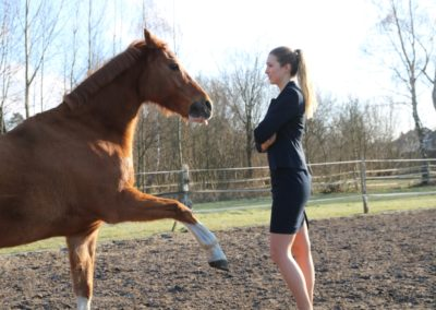 Learning from horses – Leadership training with a horse as coach