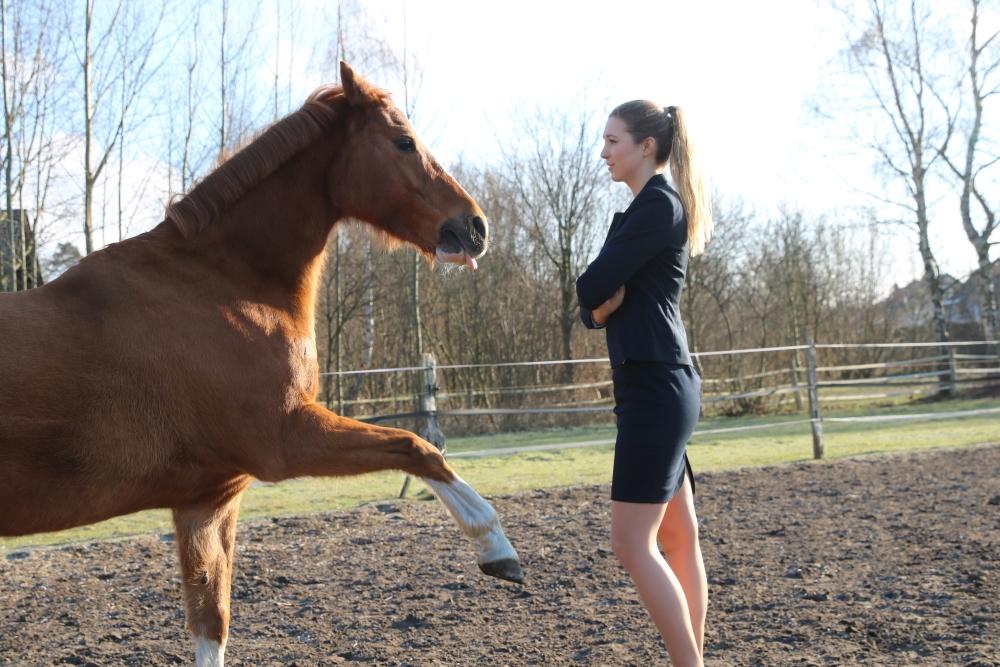 Von Pferden lernen – Das Pferd als Coach im Führungskräftetraining
